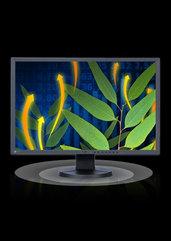 "Monitor EIZO LCD 24,1"" EV2436 (czarny) (PC)"
