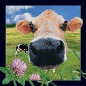 Magnes 3D Krowa