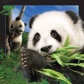 Magnes 3D - Panda