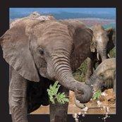 Magnes 3D - Słoń