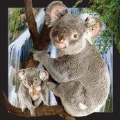 Magnes 3D - Koala