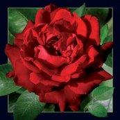 Magnes 3D - Czerwona róża