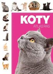 Koty Atlas ras