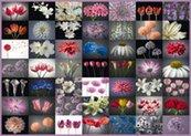 Puzzle Schmidt 2000 Kwiatowe inspiracje