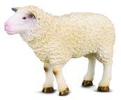 Owca M