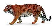Tygrys syberyjski XL