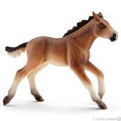 Mustang źrebię