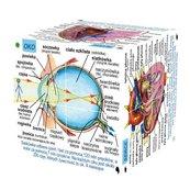 Cube Book Kostka edukacyjna Ludzkie ciało