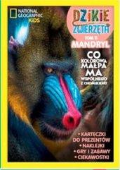 Dzikie Zwierzęta 11 Mandryl