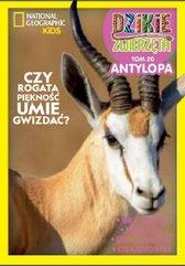 Dzikie Zwierzęta 20 Antylopa