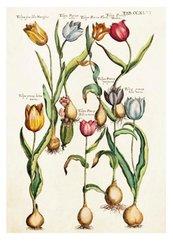 Karnet ST347 B6 + koperta Tulipany
