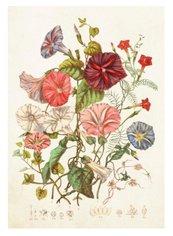 Karnet ST340 B6 + koperta Kwiaty polne