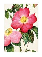 Karnet ST338 B6 + koperta Francuska róża
