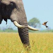 Karnet kwadrat z kopertą African Bull Elephant