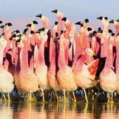 Karnet kwadrat z kopertą Andean Flamingoes