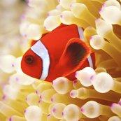 Karnet kwadrat z kopertą Clownfish in sea anemone