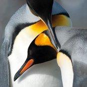 Karnet kwadrat z kopertą King Penguins