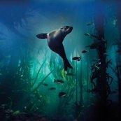 Karnet kwadrat z kopertą Galapagos Sea Lion
