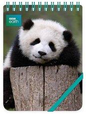 Kołonotes ozdobny Giant Panda Baby