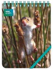 Kołonotes ozdobny Harvest Mouse