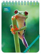 Kołonotes ozdobny Red Eyed Frog