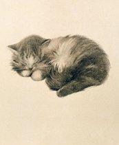 Karnet 17x14cm z kopertą Persian Kitten