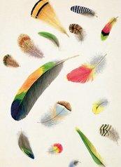 Karnet B6 z kopertą Studies of Feathers