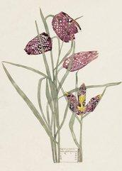 Karnet B6 z kopertą Fritillaria