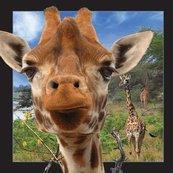 Pocztówka 3D Żyrafa