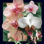Pocztówka 3D Orchidea