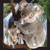 Pocztówka 3D Koala