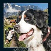 Pocztówka 3D Berneński pies pasterski