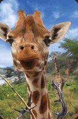 Mini kartka 3D Żyrafa