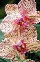 Mini kartka 3D Orchidea