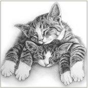 Karnet 16x16 B4D 224 002 + koperta Śpiące koty