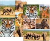 Teczka z gumką A4 dzikie zwierzęta