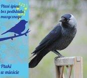 Ptaki w mieście digipack CD