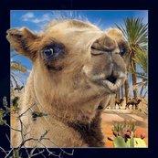 Pocztówka 3D Wielbłąd