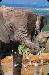 Mini kartka 3D Słoń