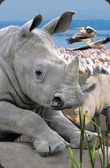 Mini kartka 3D Nosorożec