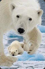 Mini kartka 3D Niedźwiedź Polarny z młodym