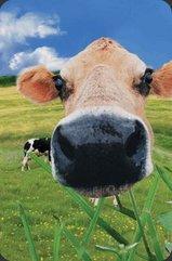 Mini kartka 3D Krowa
