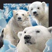 Magnes 3D Niedźwiedzie Polarne