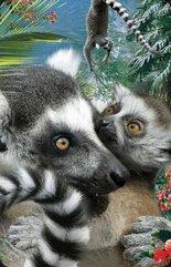 Mini kartka 3D Lemur