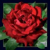 Pocztówka 3D Czerwona Róża