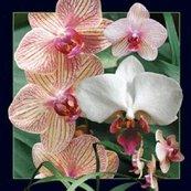 Magnes 3D Orchidea