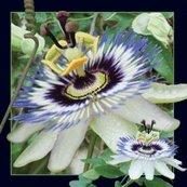 Magnes 3D Passiflora
