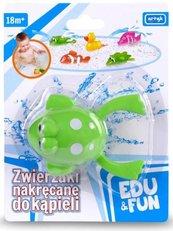 Zabawka do wody - Zielona Żabka Edu&Fun