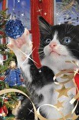 Mini kartka 3D Świąteczny Kot