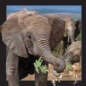 Pocztówka 3D Słoń